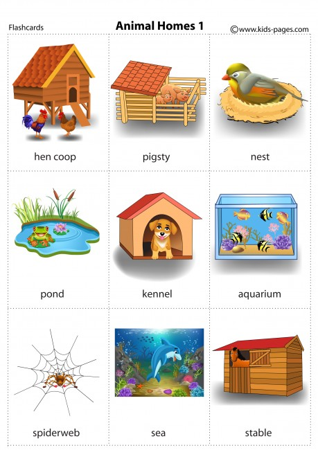 Animal Homes 1 Flashcard