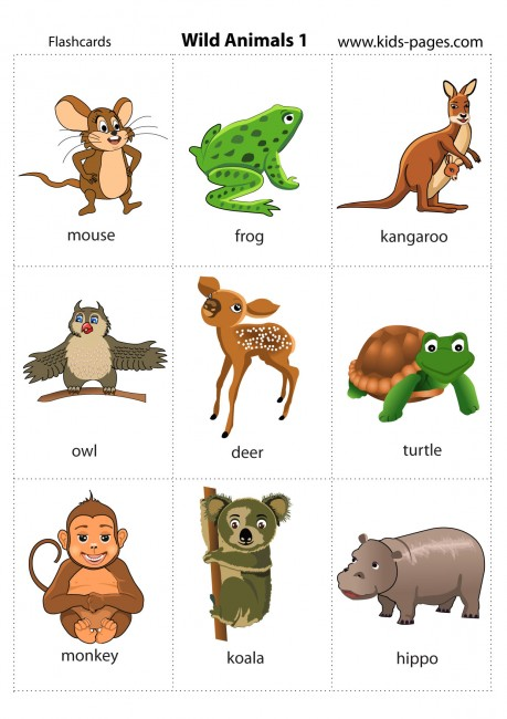 Wild Animals 1 flashcard