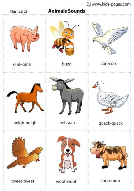 Animal Sounds flashcard