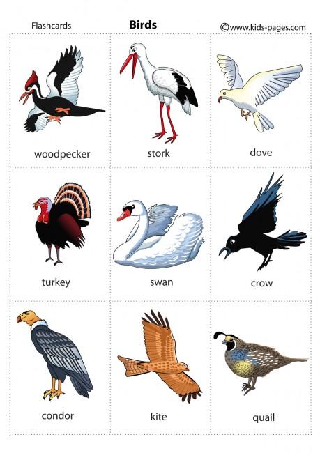 Animals Flashcards It S Fun To Learn
