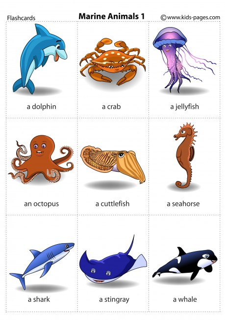 Marine Animals 1 flashcard