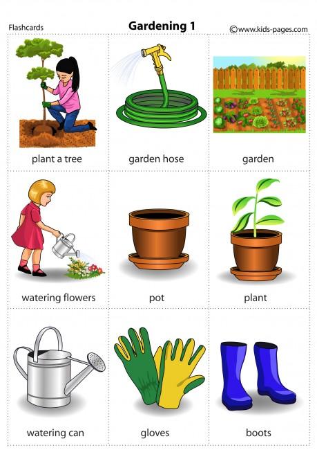 Gardening 1 flashcard