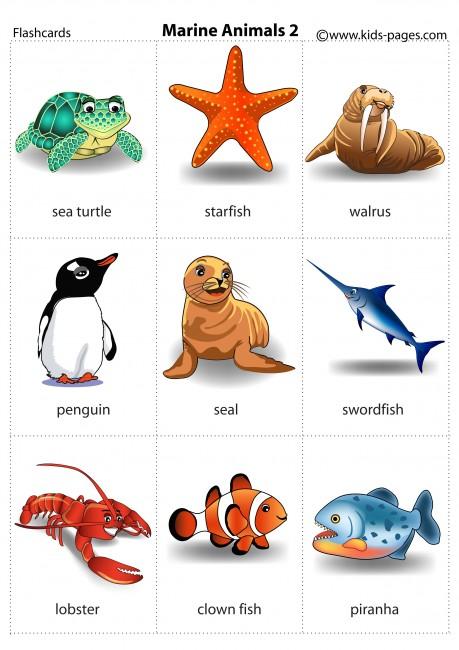 Sea Animals 2 flashcard