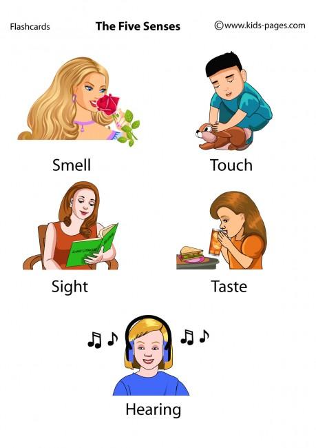 The five senses flashcards