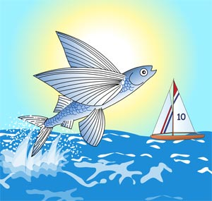 flying fish cartoon - photo #31