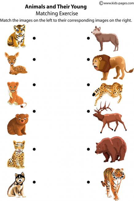 animals and their young worksheet. Black Bedroom Furniture Sets. Home Design Ideas