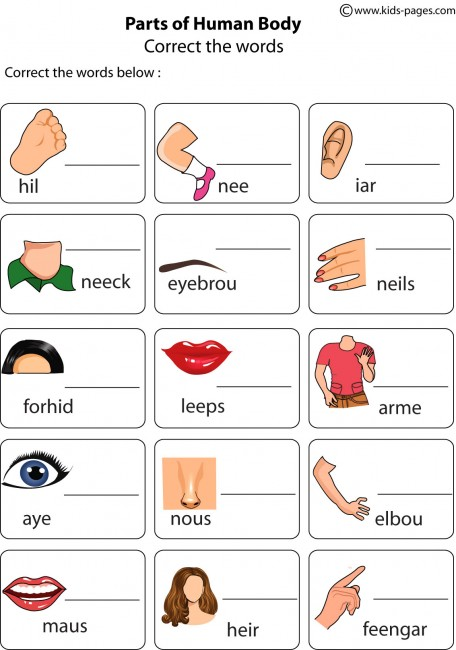 Matching Body Parts Worksheets also Printable Apple Worksheets also ...