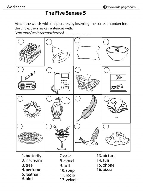 Five Sense Worksheet New 90 The Five Senses Worksheet Pdf - Download Printable 5 Senses Worksheets For Kindergarten Background