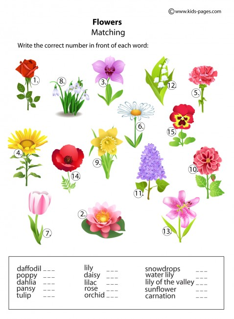 Cut and Paste Counting  Flowers   Worksheet   Education in addition Flower Bouquet   Worksheet   Education moreover Flower Printables For Kindergarten   Flowers Healthy also  together with Kindergarten Reading Pages   Flowers   A Wellspring further Color by Number Flower   interested innn   Kindergarten colors  Math as well Math Worksheets Flower Cut And Paste Amazon   Gum Flowers Sizable moreover Worksheet On Flowers   Free Printables Worksheet in addition printable kindergarten worksheets   Match flowers with name   1 besides Label Parts Of The Flower Worksheet   Kayaflower co together with  as well Flowers Worksheet   Oaklandeffect furthermore Parts Of A Flower Coloring Page Best Of Plant Parts Worksheets for moreover  together with 9  parts of a flower worksheet science  parts of a flower worksheet as well Kindergarten Plantss For Kindergarten Images Image Result Parts Of. on worksheet on flowers for kindergarten